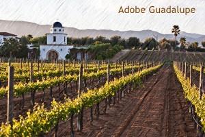 Viñedos-Bodega-Adobe-Guadalupe