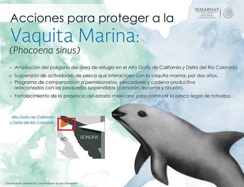 Protección-de-la-vaquita-marina