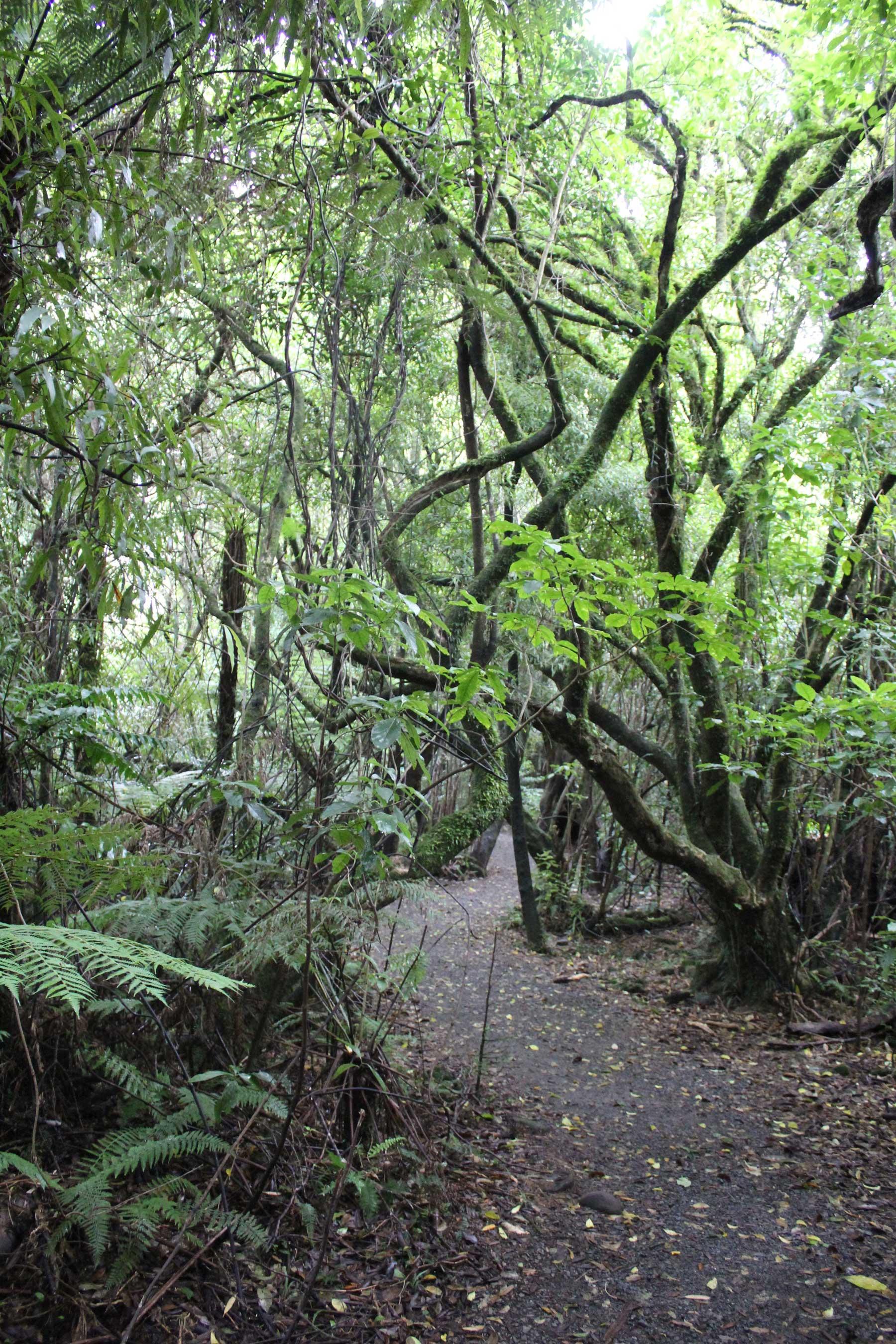 Bosque-Tropical Parque Nacional Tongariro