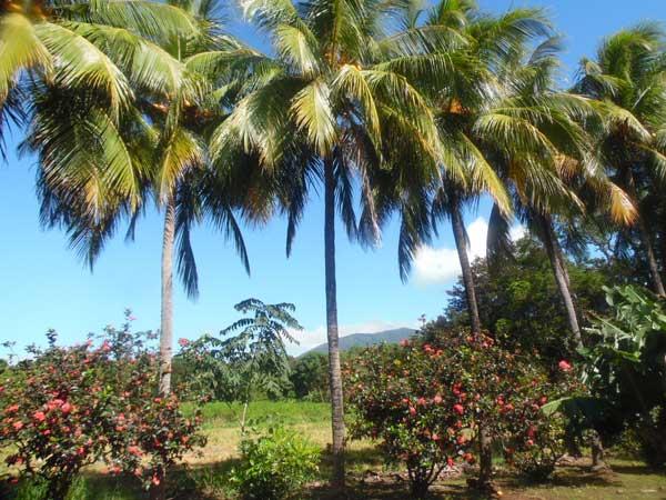 Finca-Cooperativa-Nicaragua-Libre