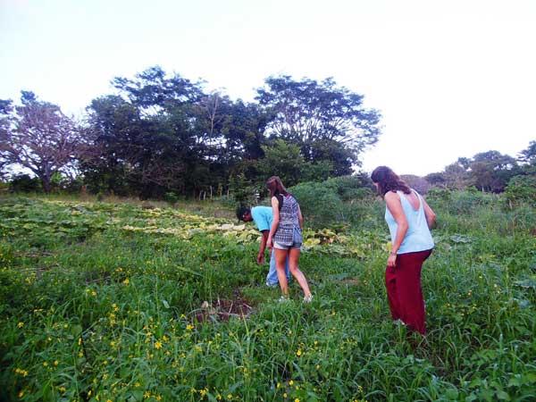 Tour-cultivos-del-momento