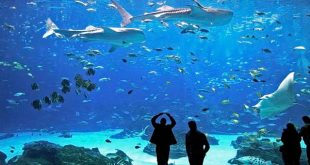 acuario puerto vallarta