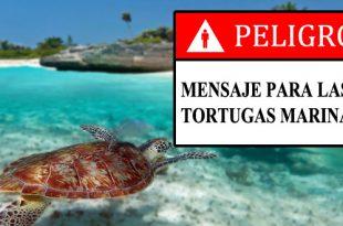 Bahía-de-Akumal-en-peligro-las-tortugas-marinas
