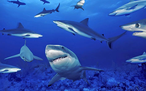 Cafe de los tiburones blancos