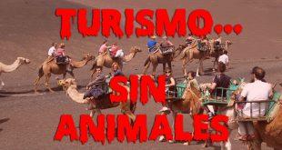 turismo-sin-animales