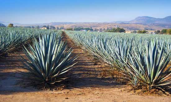 Tequila,-Jalisco