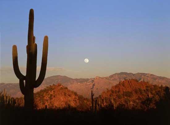 Saguaro_National_Park