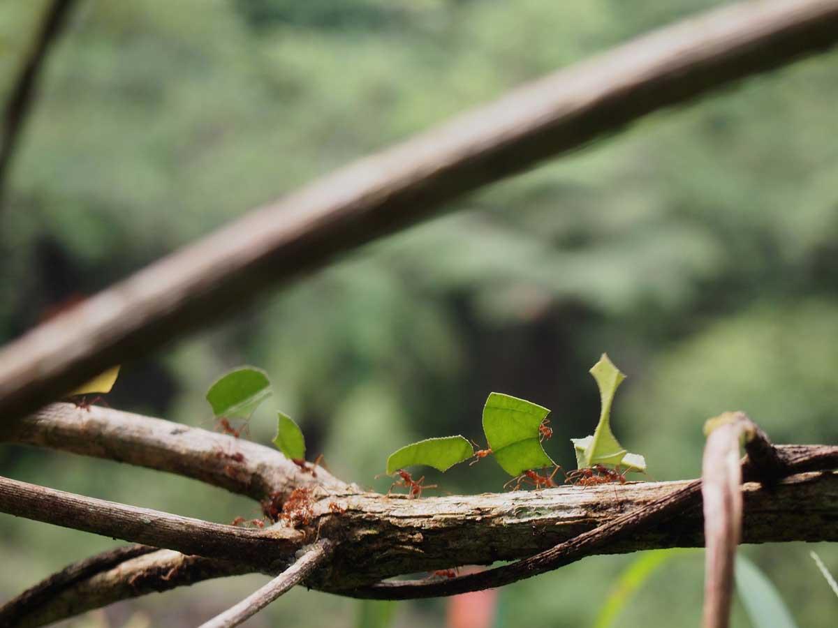 Algún-lugar-metido-en-la-selva-amazónica