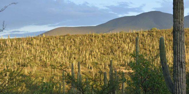 Valle de Tehuacán -Cuicatlán Patrimonio de la Humanidad