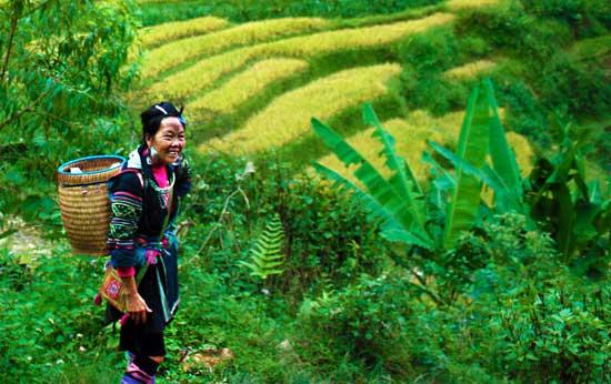 mujer Hmong en los valles de Sa Pa