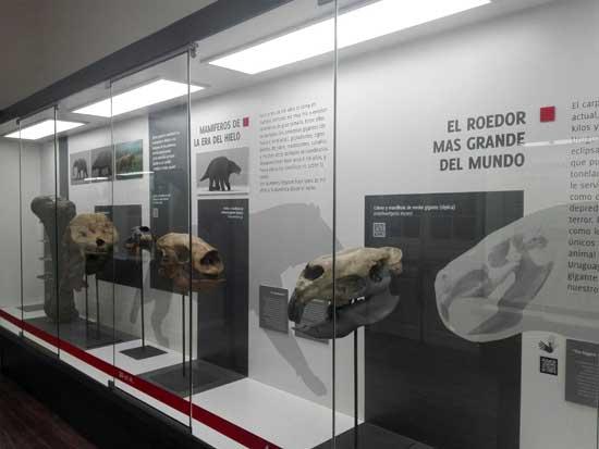 roedor más grande del mundo museo