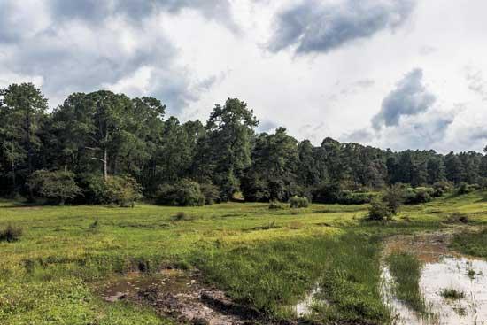 Bosque en Atemajac de Brizuela