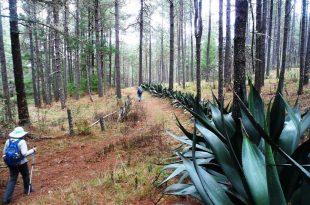 Hiking de Llano Grande a Amatlán