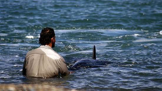 Beto y las orcas