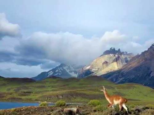 La estepa patagónica y su fauna