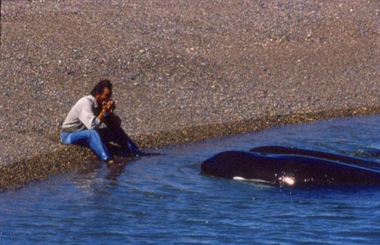 Música que acerca a las orcas