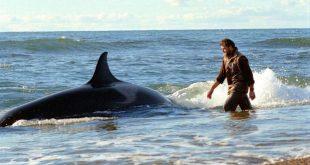 amistad con las orcas