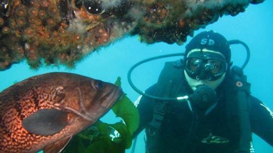 deportes subacuáticos en Chubut