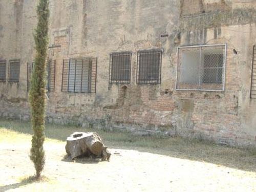 el árbol ahorcado en el Panteón de Bélen en Guadalajara