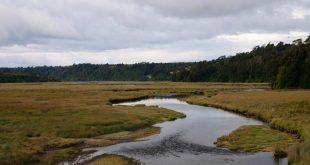 Humedales costeros en peligro: impacto del turismo en ecosistemas vulnerables