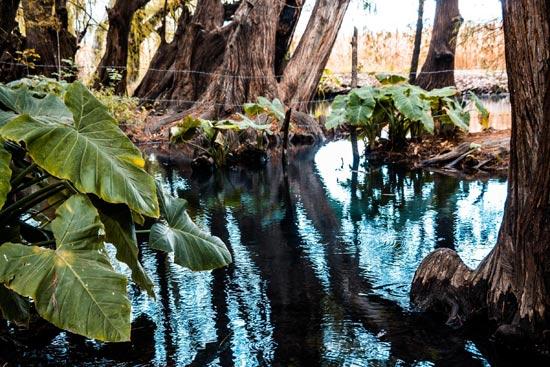 Parque Ecológico La Selvita