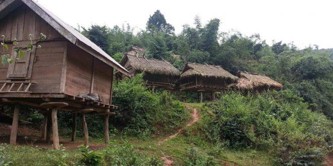 Selva de Laos