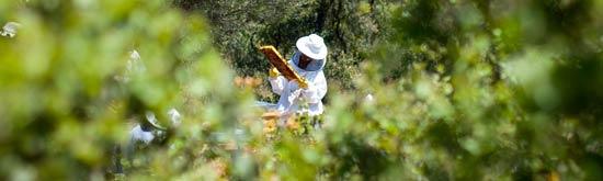 miel valveni apicultor vestido