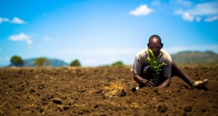 B'n'tree: ¡Viaja y planta árboles!