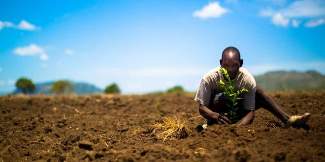 Bedandtree viajar y plantar un árbol