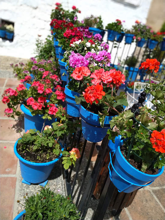 Festival de los balcones y rincones Iznajar 2