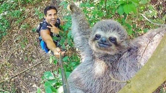 Nicolas Huskar selfie Koala