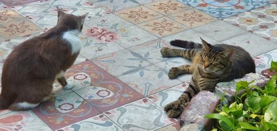 gatos casa hemingway