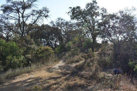 Vegetación del cráter.