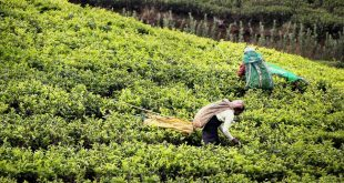Desarrollo del Turismo Rural mediante una Cadena Productiva Sostenible