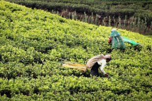 Trabajadores del campo