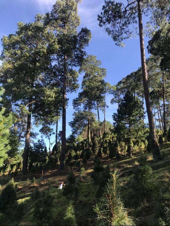 Bosque ciclo verde (15)