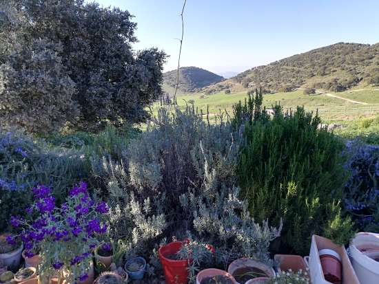 Jardín medicinal