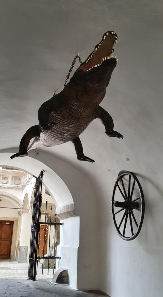 cocodrilo brno