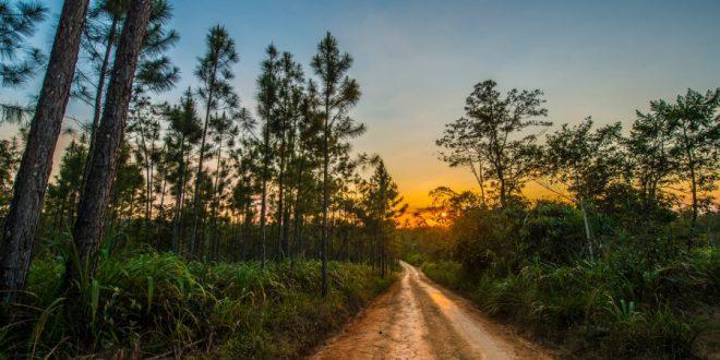 Belice rainforest