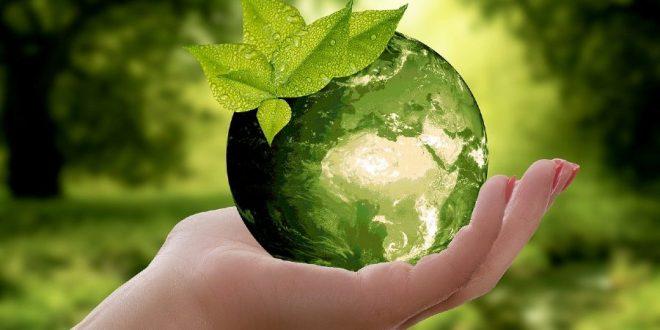 Naturaleza en nuestras manos