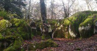 Baño de bosque