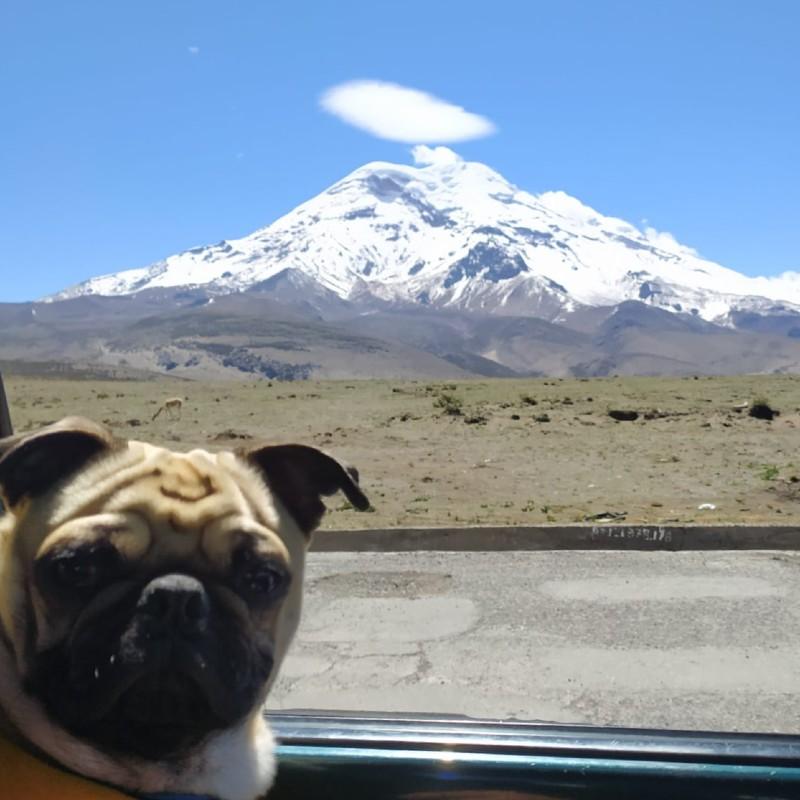 Pug y volcán con nieve