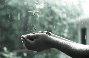 lluvia sobre una planta en la mano