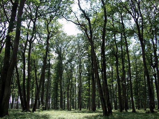 Bosques de robles en Francia