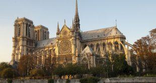 Cortarán mil árboles para la reconstrucción de la Catedral de Notre Dame ¿Valdrá la pena?