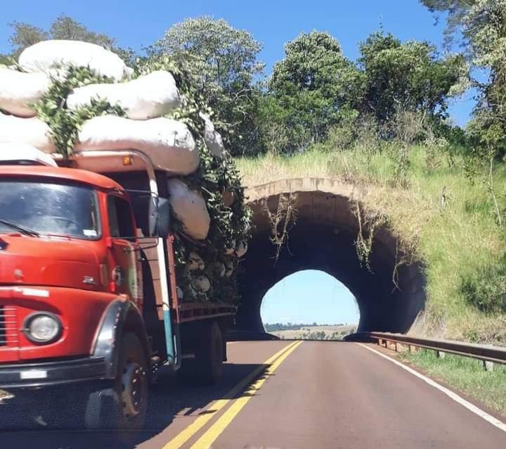 La Ruta de la Yerba Mate, camión con ponchadas hacia el secadero