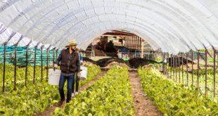 Campos de cultivo para llegar a Valnopal