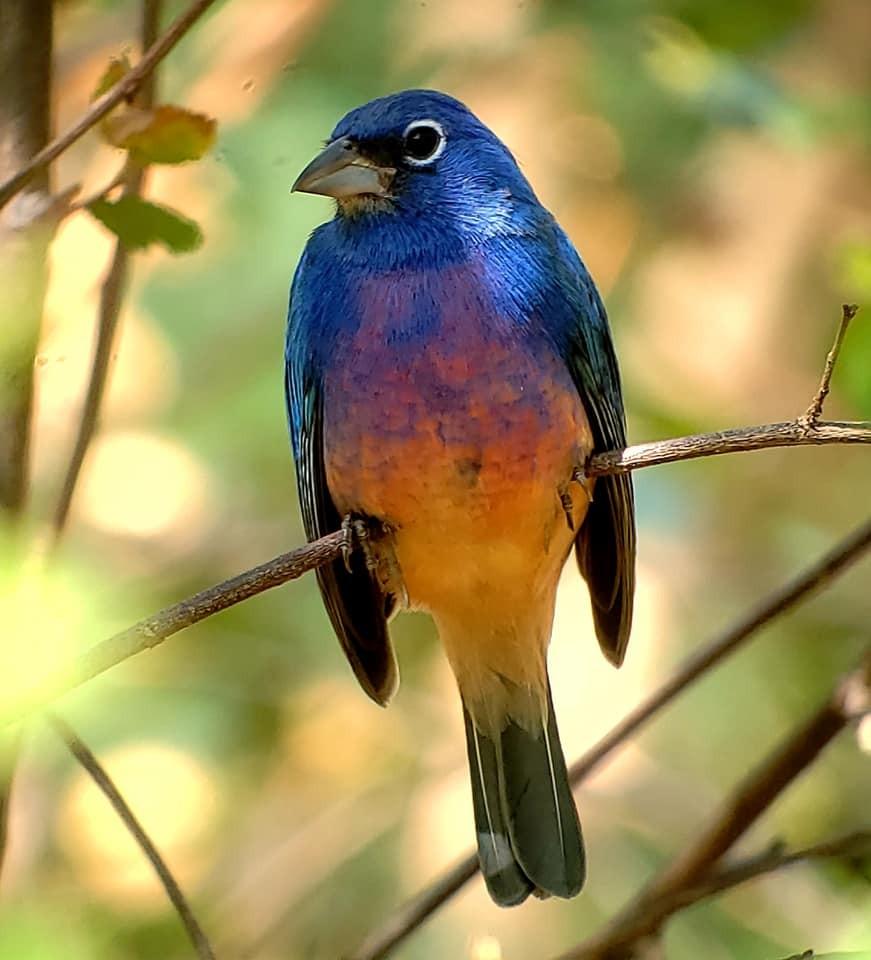 Aves en el Río Copalita