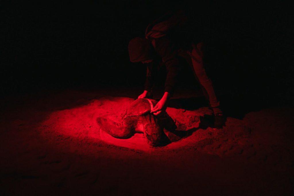 Campamento tortuguero en Puerto Escondido
