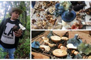 Recolección de hongos en Amealco